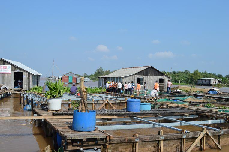 De drijvende viskwekerij van Ly Van Bon. Hij kweekt duizenden vissen per jaar. Vietnam is één van de grootste visexporteurs ter wereld. Veel vis komt van viskwekerijen als deze.  Beeld Ate Hoekstra