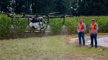 Vlaanderen bestrijdt insecten met drones