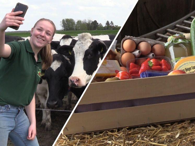 Op Boerderijsafari in Brabant: 'Even uitstappen voor een selfie met de koeien'