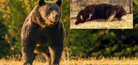 Prins van Liechtenstein schiet 'grootste beer in Europa dood', activisten woest