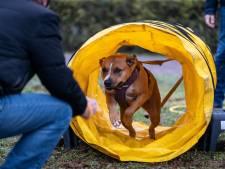 Bajesklanten leren beter gedrag door asielhonden te trainen en rugby te spelen