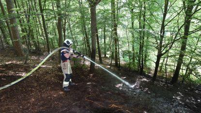 Opnieuw bosbrand in het Zoniënwoud, nadat eerder vandaag al 1.000 m² bos vernield raakte na brand veroorzaakt door barbecue