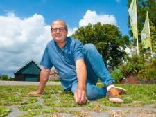 Last van onkruid in de tuin? 'Gewoon laten groeien'