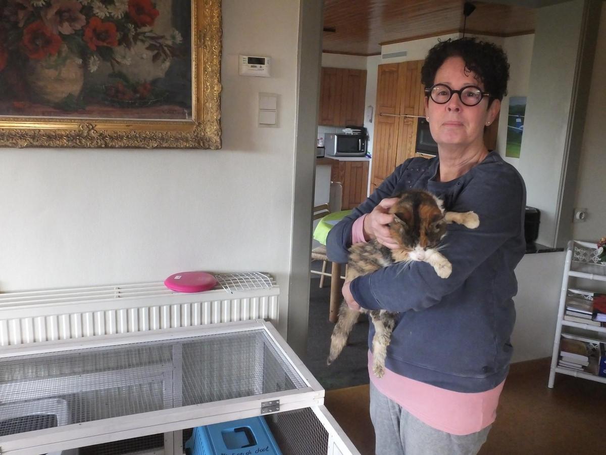 Patricia Rotsaert met een zwerfkat die werd gevonden op een parking in Deinze.
