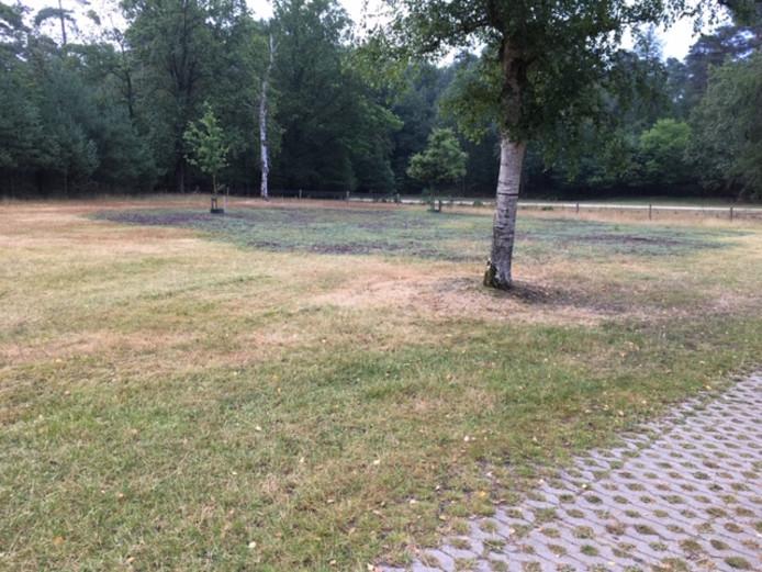 Het effect van Bokashi. Een groene plek in een verder dorre Bosweide in park Berg & Bos.