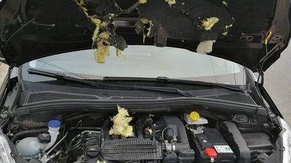Marters slaan toe onder motorkap