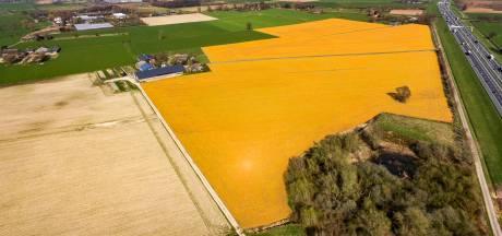 Gemeenten leggen zelf verbod omstreden gif glyfosaat op: 'zorgen over drinkwater'