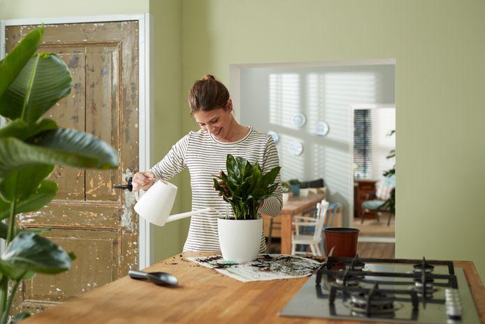 Voor planten geldt: hoe groter, hoe makkelijker ze te verzorgen zijn.