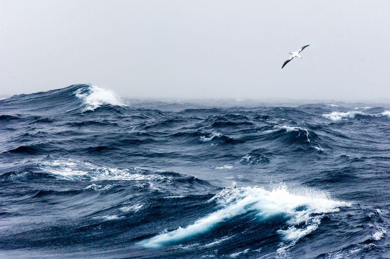 Albatros boven ruwe zee. Beeld Getty