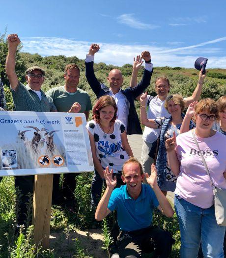 Schapen en geiten krijgen een lintje voor onderhoud van duinen: 'Het zijn de beste medewerkers'