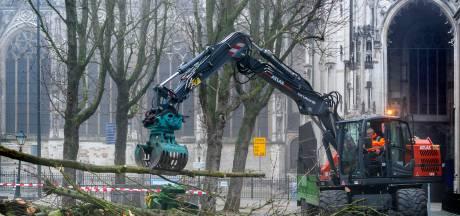 Twee kastanjebomen geveld op de Bossche Parade: en na testen mogelijk meer
