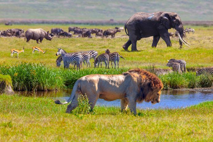 Le parc national du Serengeti, en Tanzanie.