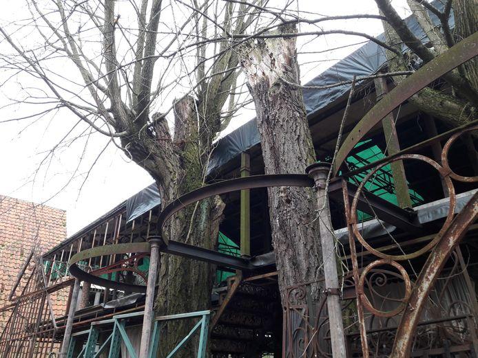 Bomen maken deel uit van het 9 meter hoge bouwwerk dat Marcel en Angèle van Riel als theetuin bij hun museum willen trekken