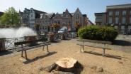 Stad dagvaardt bomenkweker