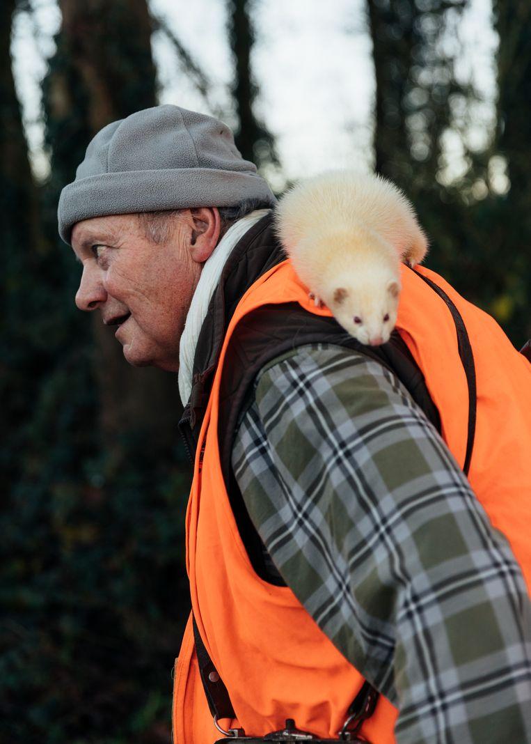 Daniel Vestu heeft een fret mee, die kan worden ingezet om konijnen uit hun holen te verjagen.  Beeld Rebecca Fertinel