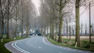 Sint-Rijkersstraat vanaf 11 maart voor tien dagen volledig afgesloten om ruim 100 bomen te rooien