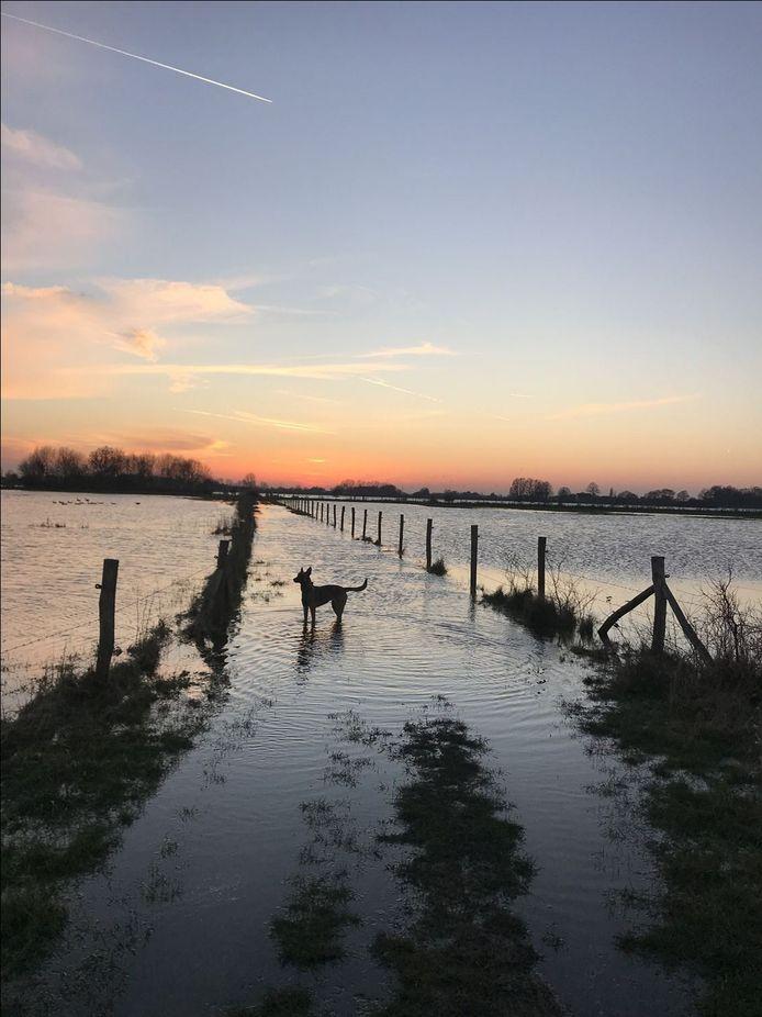 De hond van Henk Harmsen  haalt natte poten in  de IJssel bij Diepenveen.