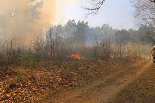De brand in het bosgebied tussen Arnhem en Velp.