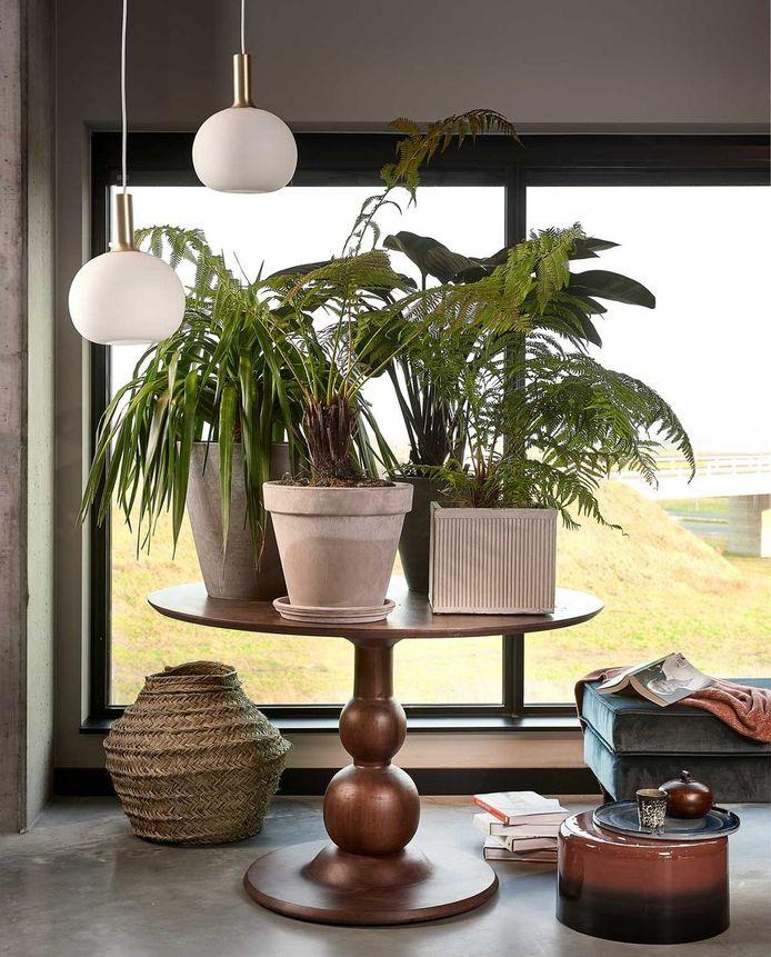 Gek op planten? Zet er lekker je huis mee vol. Styling Fietje Bruijn.