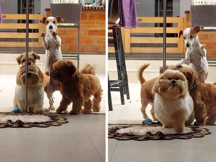 Wat een teamwork: hondjes bundelen krachten om deur van baasje te openen