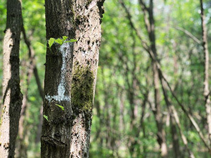 Een markering geeft aan welke bomen moeten wijken.