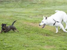 Cadeautje voor viervoeters Twenterand: 5000 euro voor iedere kern om hondenspeelveld aan te leggen