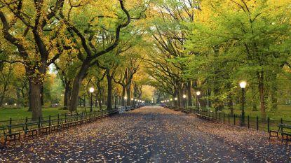 Putje zomer, maar bomen lijken in herfstmodus: hoe komt dat?