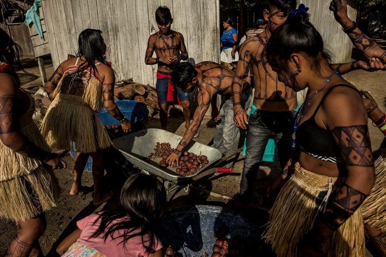 Munduruku-stamleden sorteren fruit.  Beeld NYT
