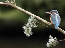 Birdify, un Shazam pour les chants d'oiseaux