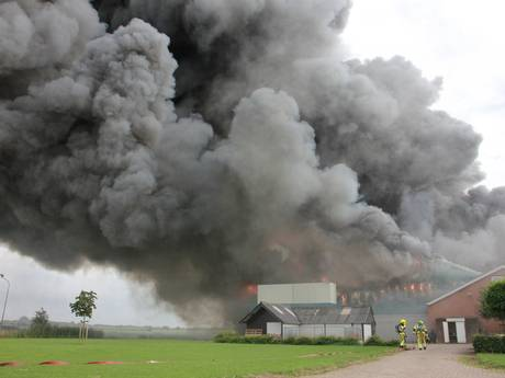 Grote brand in varkensschuur Erichem: duizenden dieren in gevaar