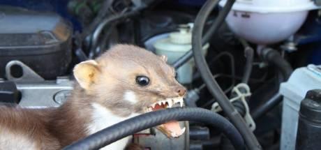Menselijke urine, kippengaas en hondenhaar houden deze vandaal weg bij je auto