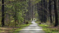 Vlaamse bossen zijn er beter aan toe dan 20 jaar geleden
