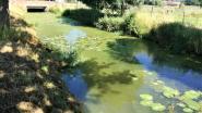 Geen blauwalgen maar groenalgen op de Markrivier