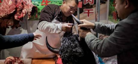 L'OMS demande l'arrêt de la vente de mammifères sauvages vivants sur les marchés