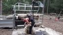 De schaapscheerder aan het werk in de schaap-scheer-speel-kraal in Zeeland.