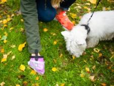 SV Meerkerk doet oproep na hondenpoep op voetbalveld: 'Ruim uitwerpselen op'