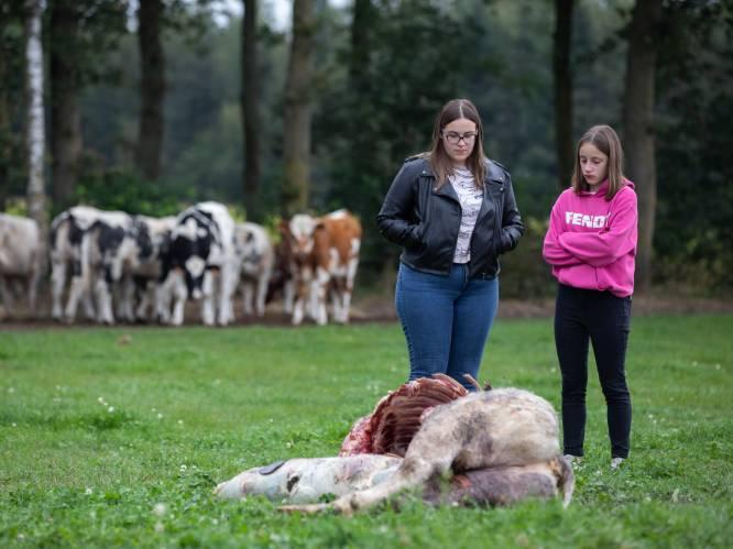"""""""Met goeie afsluiting kan je wolven 'leren' van schapen af te blijven"""""""