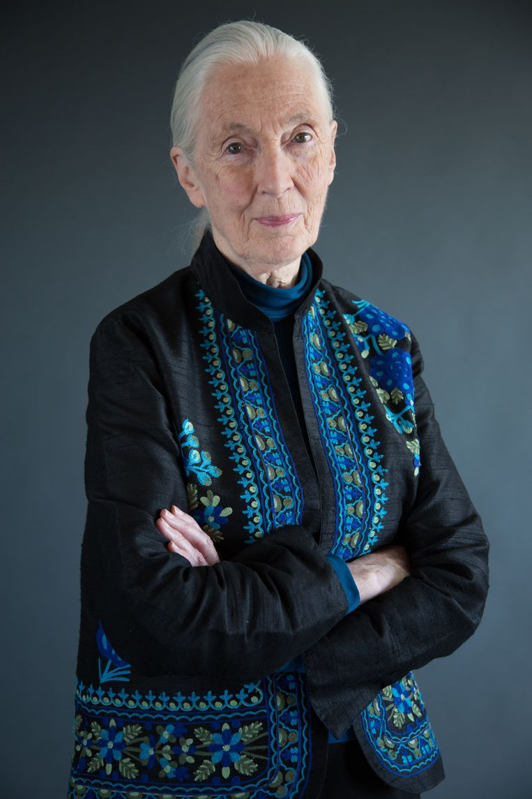 Jane Goodall. Beeld National Geographic/Stewart Voll