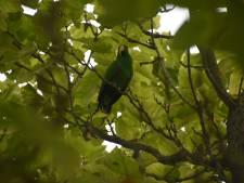 De vogel is gevlogen: brandweer probeert ontsnapte papegaai te vangen in boom