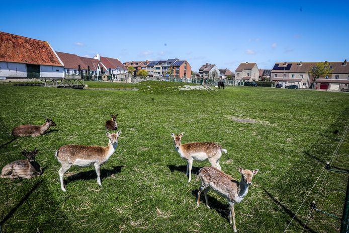 Onder meer de Vicognewijk is enorm in trek bij jonge gezinnen, omdat er heel wat groene pleinen zijn.