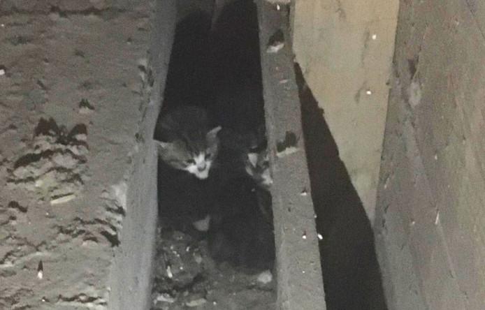 De kittens werden gevonden achter een schot bij een spouwmuur.
