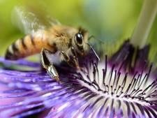 Sept pesticides à interdire pour protéger les abeilles