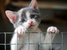 Geen vrees voor uitbraak kattenziekte in  Zuidoost-Brabant, maar er worden te weinig katten ingeënt