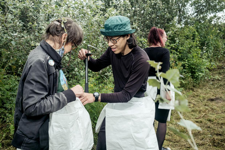 Kunstenaar Yoshinari Nishiki oogst jonge scheuten van de Japanse duizendknoop.  Beeld Jakob van Vliet
