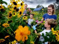 Bloemen plukken voor een prikkie in Dordrecht: 'Iedereen wordt er vrolijk van'