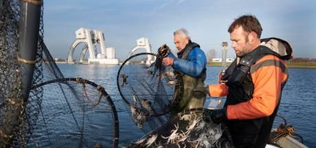 De laatste paling voor dit jaar wordt langs de stuw bij Amerongen geholpen