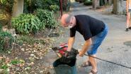 Vissers redden tiental palingen van dood na oproep burgemeester