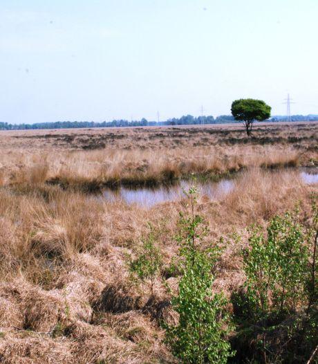 Hoogveen moet in Wierdense Veld weer kans krijgen door natuurherstel