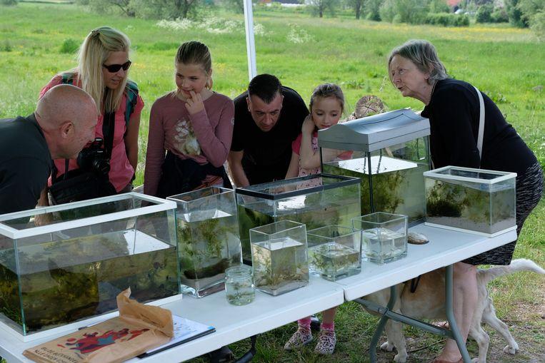 Het hele weekend gingen specialisten op zoek naar fauna en flora in de Kalkense Meersen