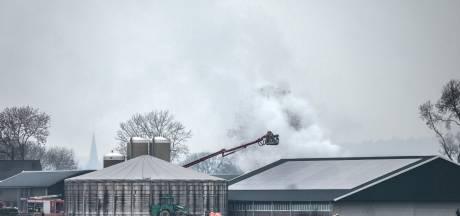 Slechts een paar van de 9000 varkens gestikt door de rook bij stalbrand Netterden